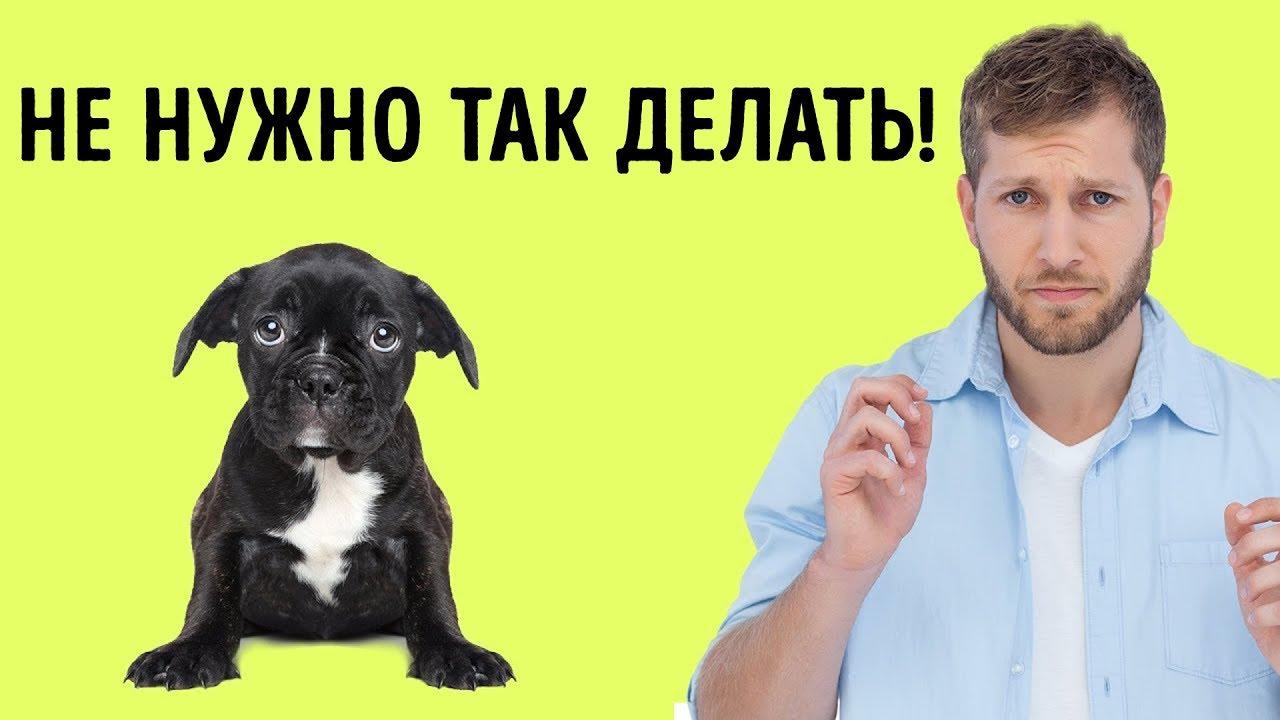 12 Человеческих Привычек, Которые Собаки Терпеть Не Могут