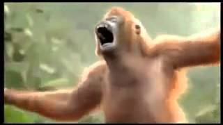 Monkey dance indonesian dangdut song