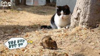 [특종] 실제상황! 고양이가 살아있는 생쥐를 만나면? 현실판 톰과제리