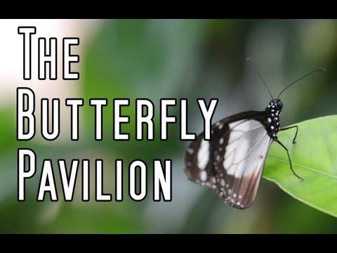 The Butterfly Pavilion - Denver, CO