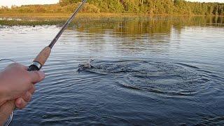 Ловля щуки в августе видео  Смотри ловля щуки видео  Рыбалка видео бесплатно