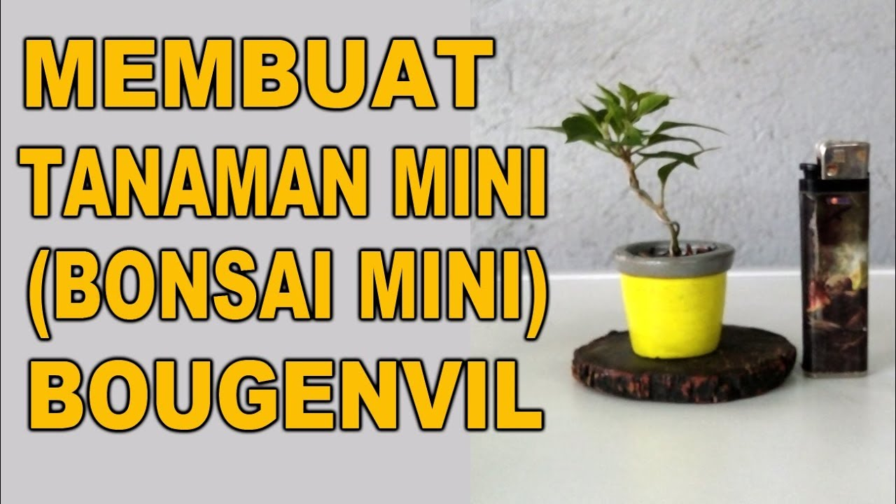 Membuat Tanaman Hias Mini Bonsai Mini Bahan Bougenvil Hasil Stek