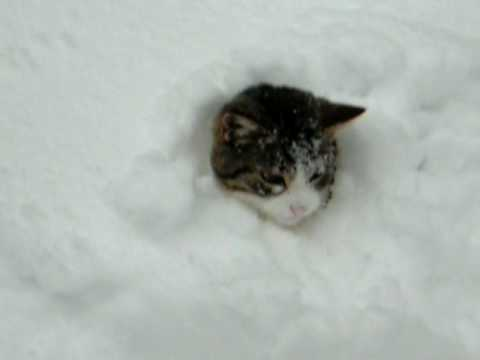 Cat Loves Playing In The Snow