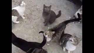 Коты не пропускают к машине после рыбалки - требуют рыбу.
