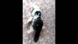Кот укротитель мягких игрушек