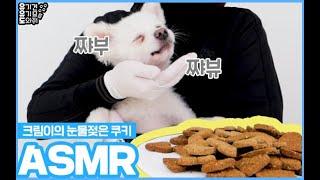 [유유도] 유기견 크림이의 강아지 ASMR | 강아지 먹방 | 유기견 임보 | 사지말고 입양하세요