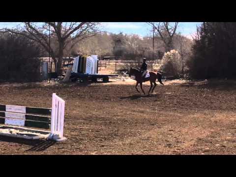 Dominica - 5YR - Rancho Corazon - BDN Sport Horses
