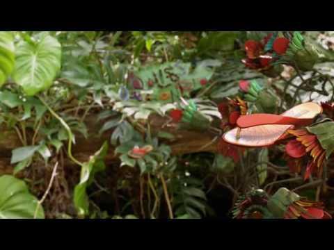 MELISSA - Amazonista