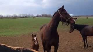 Foal greeting others for the first time