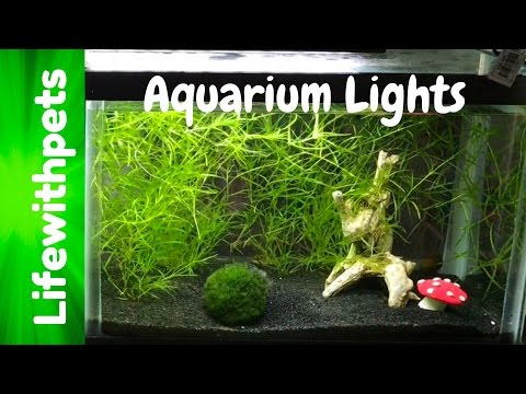 Which Aquarium Light Is Better?