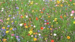 Flüsse aus Gold - Karel Svoboda - Die Biene Maja Soundtrack
