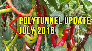 Chilli Poly Tunnel Update July 2016