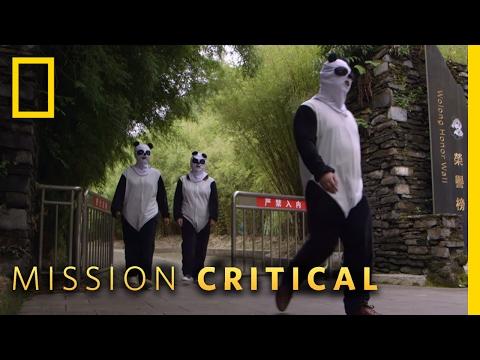 Undercover Pandas | Mission Critical