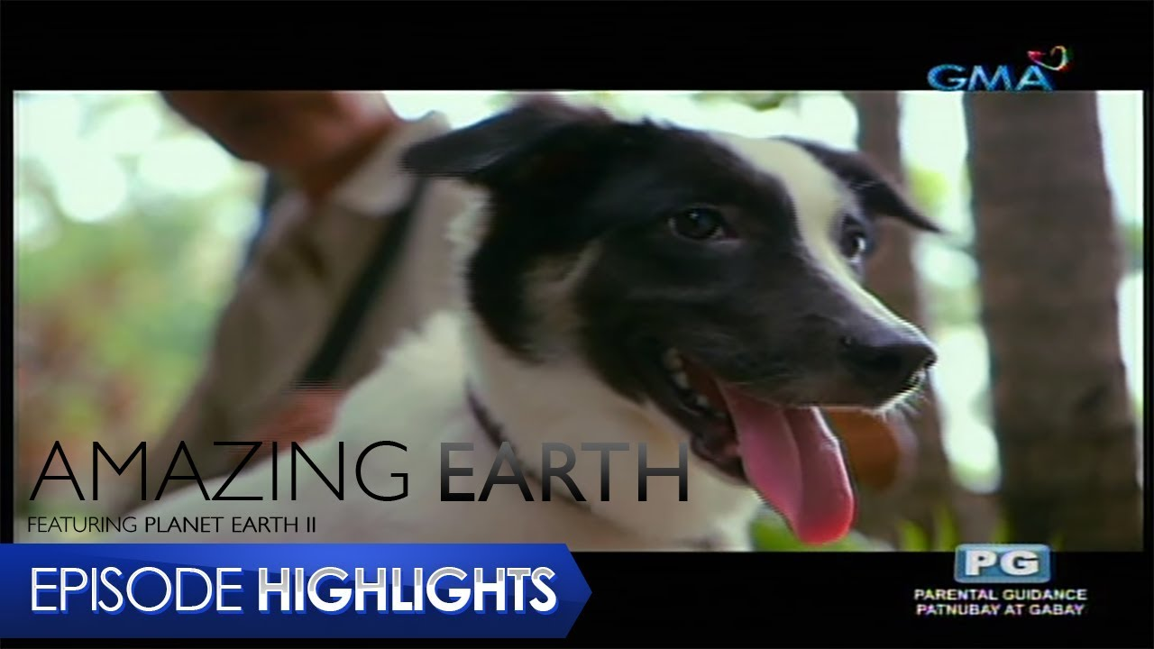 Amazing Earth: Taking care of Aspin