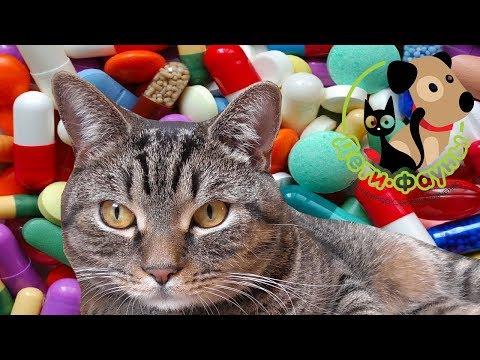 Глисты у кошек и котят. Как избавиться от глистов