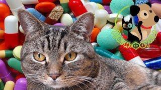 Зачем глистогонить собаку (кошку) за 10 дней до прививки?