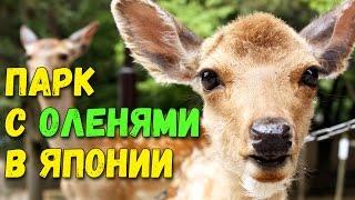 Скачать Парк с ручными оленями в Нара Город оленей в Японии