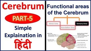 Functions of Cerebrum or Cerebral cortex (Sensory Areas) in Hindi | Bhushan Science