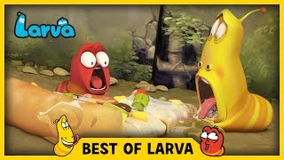 LARVA | BEST OF LARVA | Funny Cartoons for Kids | Cartoons For Children | LARVA 2017 WEEK 26