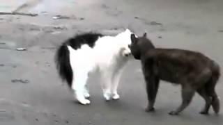 Коты говорят!Жесть!