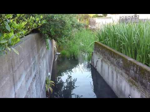 Groundwater and white heron