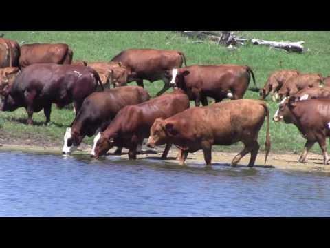 Pine Ridge Ranch Pasture Scenes 2016