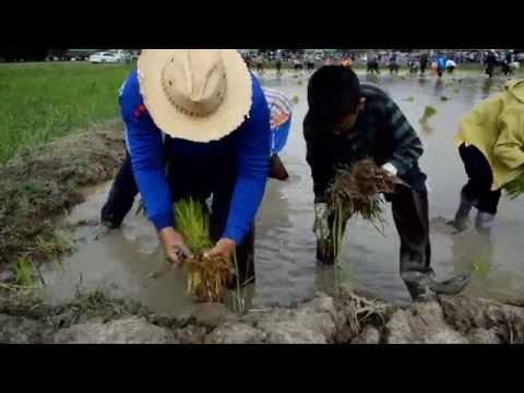กิจกรรมพัฒนาผู้เรียน เกษตรแบบยั่งยืนตามวิถีชาวบ้าน