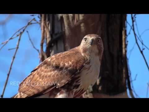 Who's Calling? Here's What Some Treasure Valley Birds Look and Sound Like