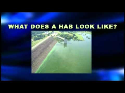Harmful Algal Blooms in Kansas Lakes, Ponds and Streams 2012