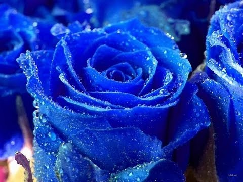 Blue Flowers Meaning