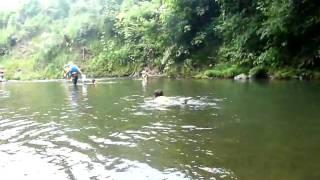 8月7日に栃木の那珂川町で行われた武茂川下りの動画その3。 那珂川の支...
