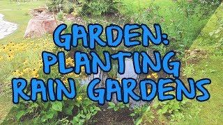 Garden: Planting Rain Gardens