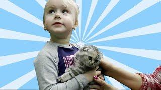Покупаем Кошку на выставке ребенку! Шотландская вислоухая кошечка играет - Видео для детей про кошку