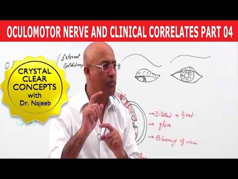 Oculomotor Nerve and Clinical Correlates Part 4