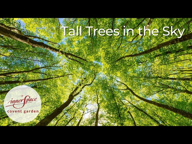 Tall Trees in the Sky | Guided Meditation