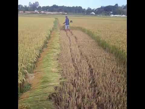 Sáng chế mới cho bà con nông dân từ chiếc máy cắt cỏ thành máy cắt lúa thần kỳ