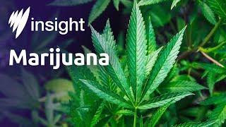 Insight: S2014 Ep34 - Marijuana