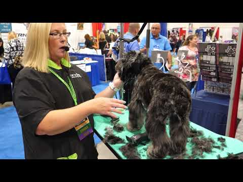 Grooming an Aussiedoodle with Tammy Siert