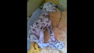 Интересное видео о животных