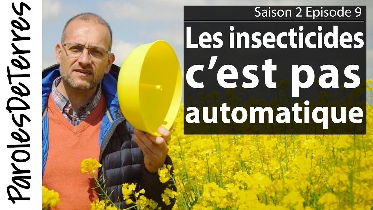 Ravageurs et insectes utiles du Colza !