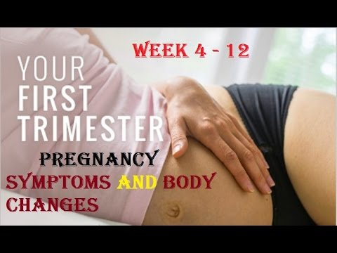 Pregnancy first Trimester week by week||Pregnant Women ...