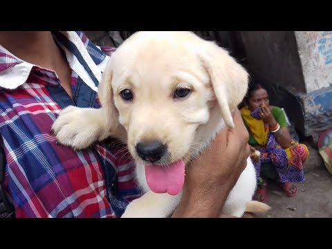 LABRADOR PUPPY AND NEW OWNER AT GALIFF STREET PET MARKET KOLKATA