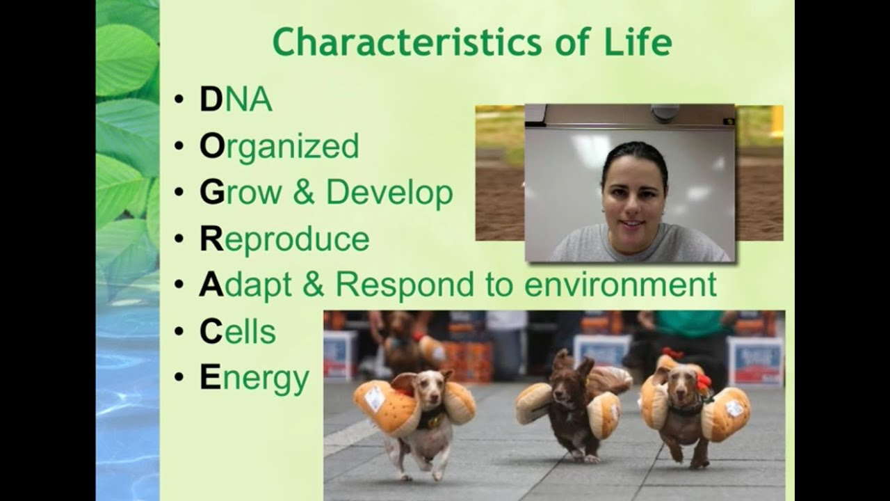 properties of life We explain 7 characteristics of life with video tutorials and quizzes, using our many ways(tm) approach from multiple teachers learn about the building blocks of life in this lesson by examining cellular organization and development.