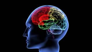 Воскрешение мозга (рассказывает Вячеслав Дубынин)
