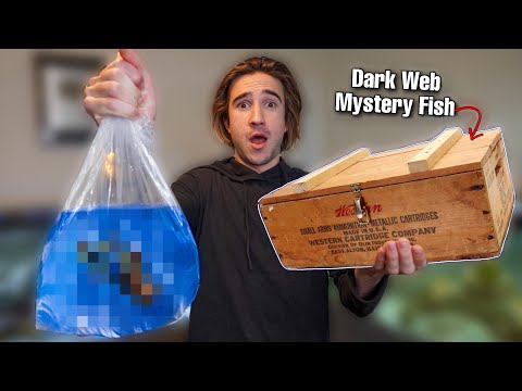 DON'T BUY LIVE FISH OFF THE DARK WEB... (what's inside?)