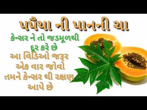પપૈયા-ના-પાનની-ચા-પીવો-અને-દૂર-કરો-કેન્સર-|-gharelu-upchar-in-cancer-|-gujarati-ayurved