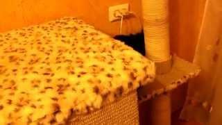 Кошкин дом,когтеточка своими руками.(Scratching Post Scratch Board Climbing Frame Toy for Cat)(Игровой комплекс для кошек,когте-точка своими руками.Изготовлена из старого дсп,взятого со старого шкафа.Д..., 2014-04-26T12:40:47.000Z)