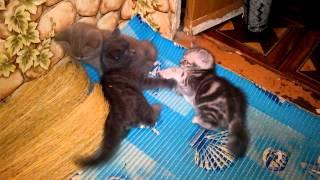Бешеные котята игра