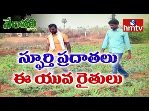 Natural Farming | Software Engineer Bhaskar Turns Farmer | Nela Talli | Telugu News | hmtv