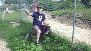 Understanding Dog Behavior In A Shelter Environment With Steffen Baldwin Of Act Ohio